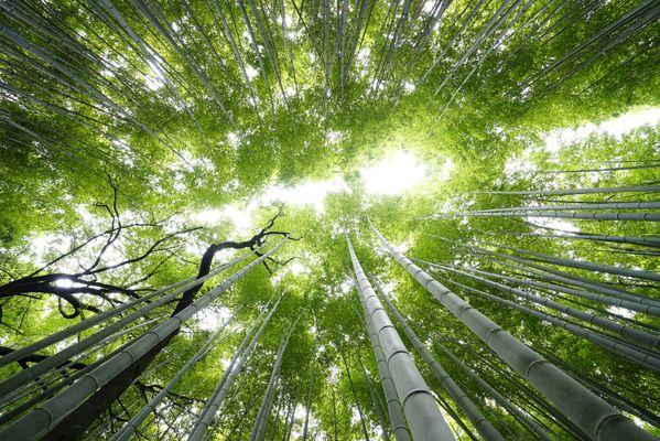 Arashiyama vertical forest thumbnail