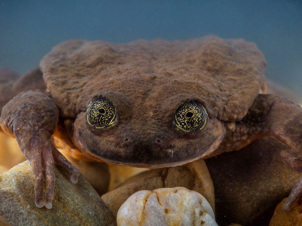 Juliet Frog