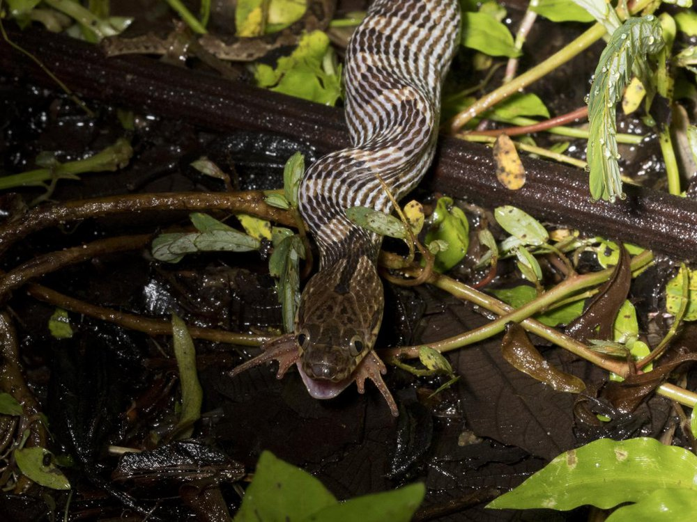 2020_feb14_snakefrog.jpg
