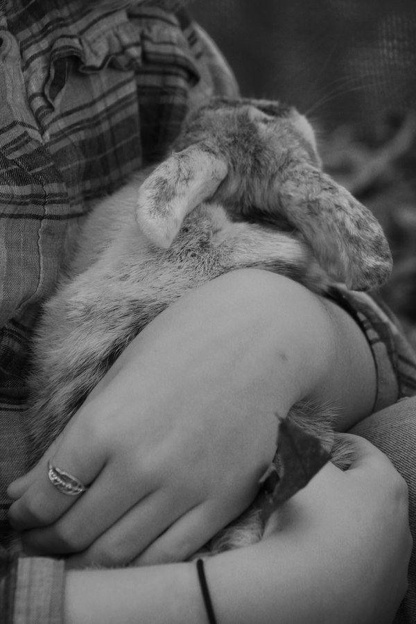 Little girl with her bunny. thumbnail