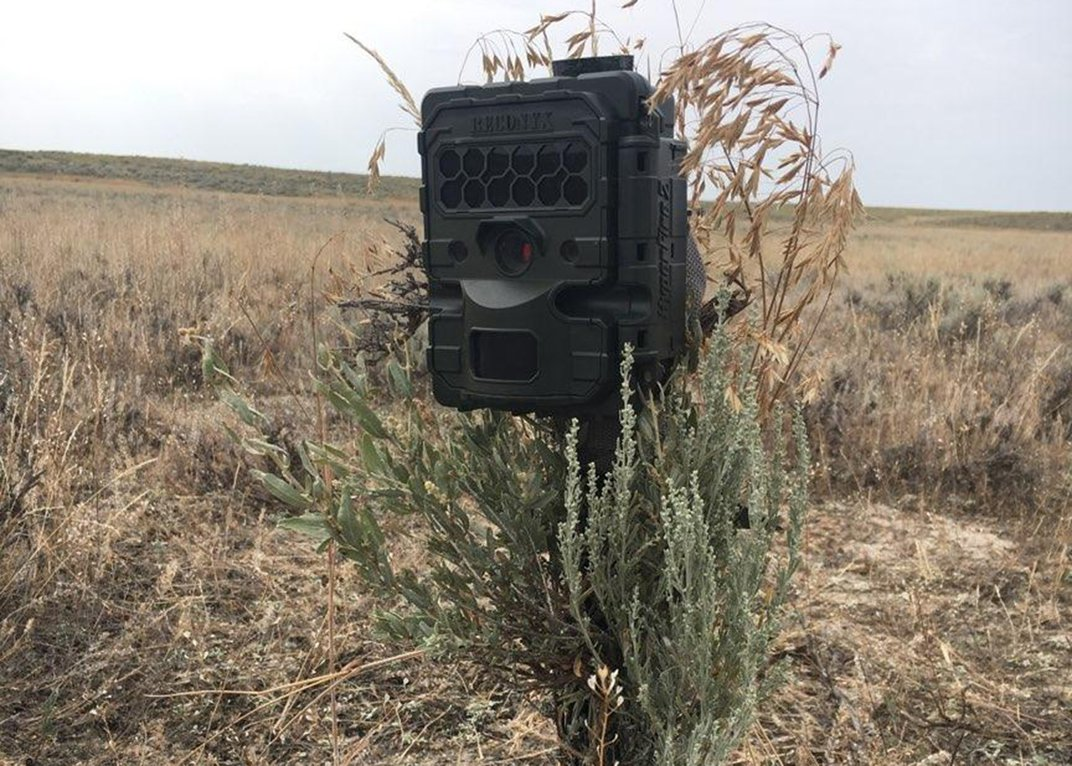 A camera trap set up at our field site is camouflaged with prairie grasses