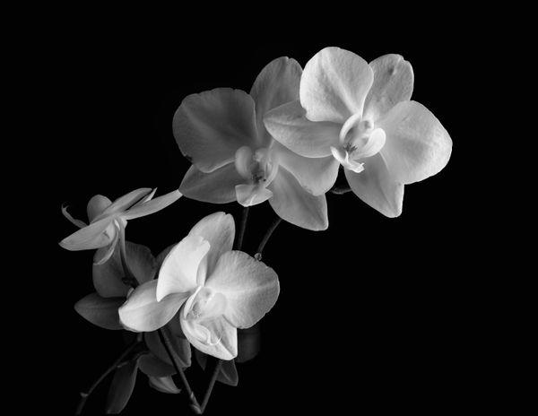 Orchids for Cheryle thumbnail