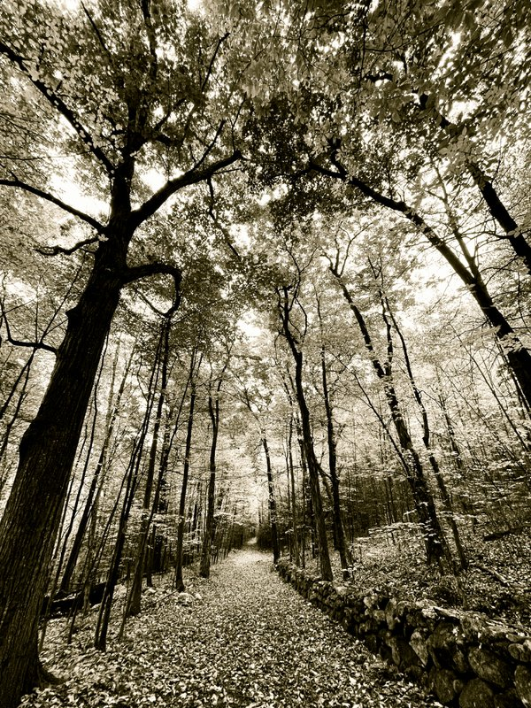 Walking the Forest Path thumbnail