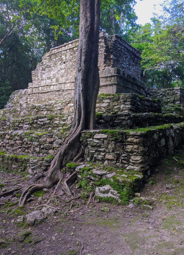 A tree grows through an ancient Mayan temple. thumbnail