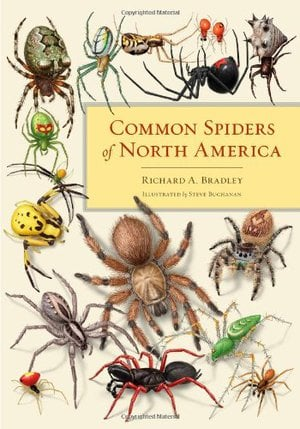 Preview thumbnail for video 'Common Spiders of North America