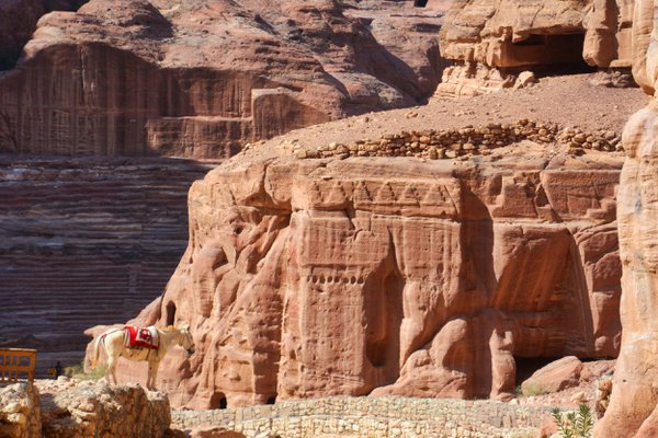A donkey resting in the ancient city of Petra thumbnail
