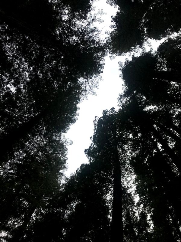 From the Forest Floor thumbnail