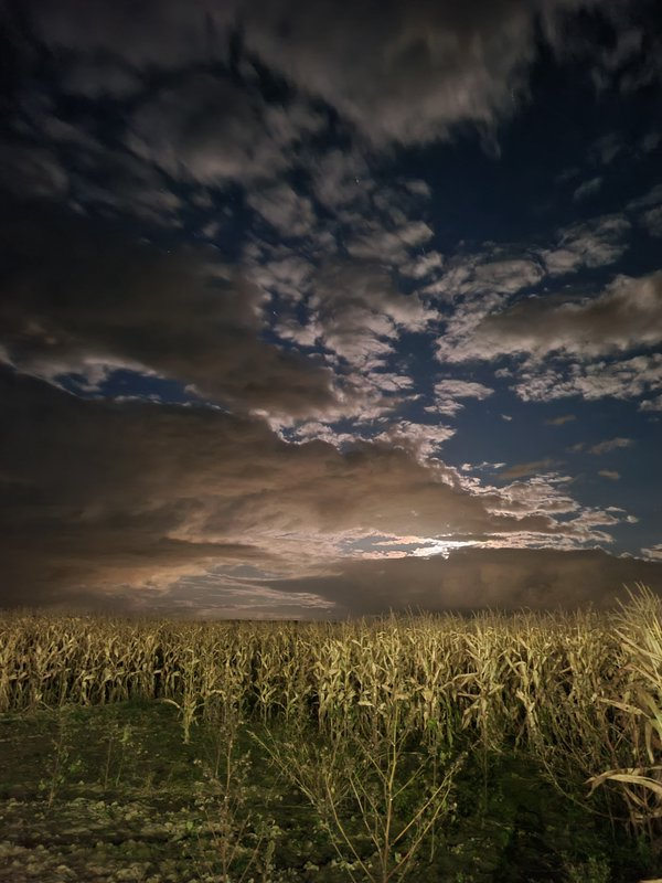 Cornfield during night thumbnail