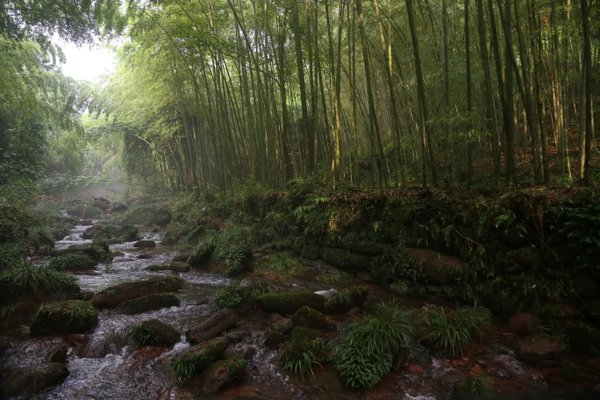 Bamboo forest thumbnail