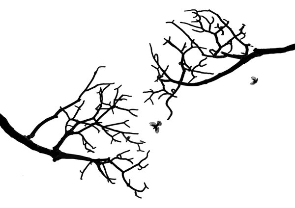 On the branch thumbnail