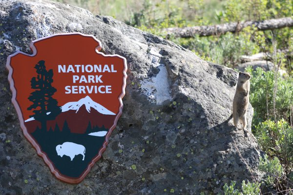 National Park Service Ambassador the Ground Squirrel   thumbnail