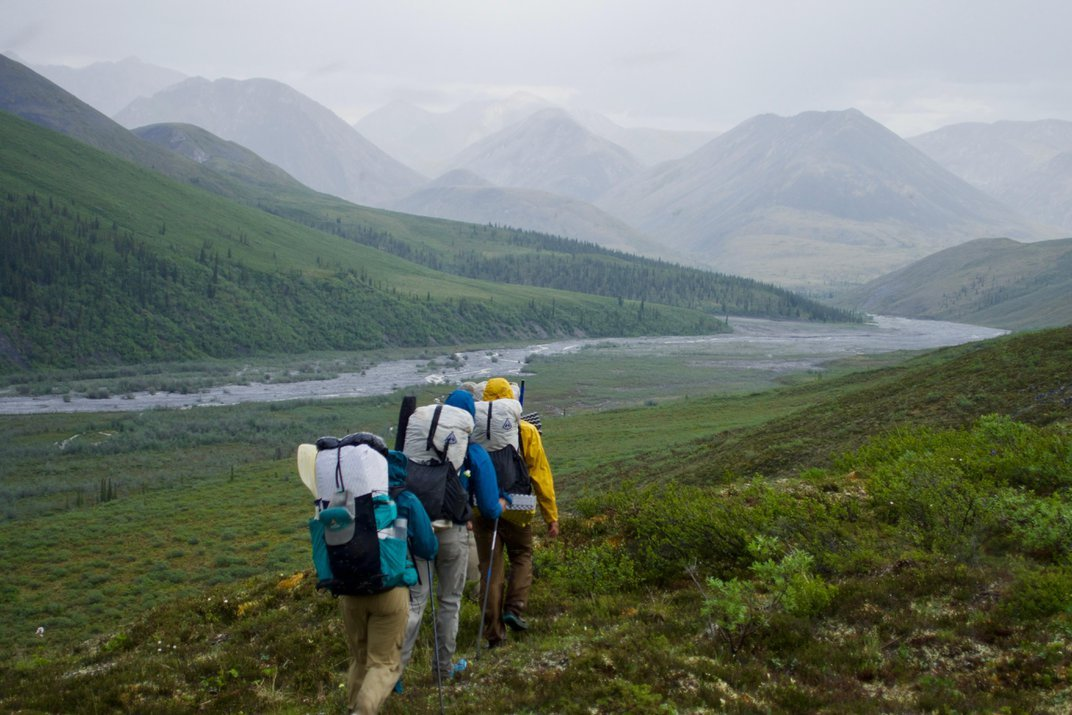 A Journey to the Northernmost Tree in Alaska