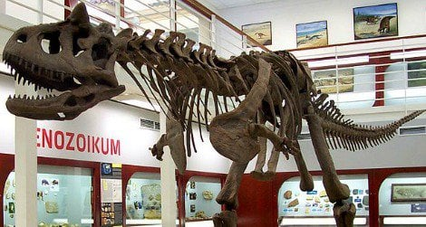 The skeleton of Carnotaurus at the Chlupáč Museum in Prague