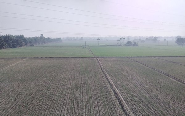 A field sown with wheat while roaming on the terrace thumbnail