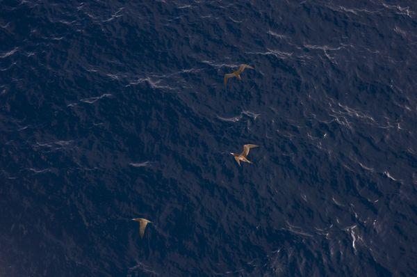 Birds Flying Above the Ocean thumbnail