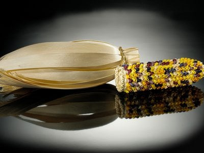Theresa Secord (Penobscot, b. 1958). Ear of corn basket, 2003. Maine. 26/1694. By looking at  Thanksgiving in the context of living cultures, we can make the holiday a more meaningful part of teaching and learning, in school and at home.