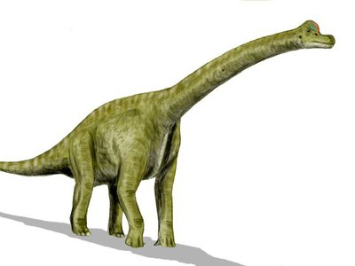 Sauropodomorphs are a group of massive, long-necked dinosaurs that are the largest dinosaurs and land animals that ever lived, and later evolved into Brachiosaurus and Apatosaurus.