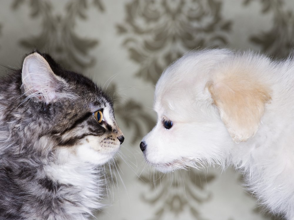 04_22_2014_catdog.jpg