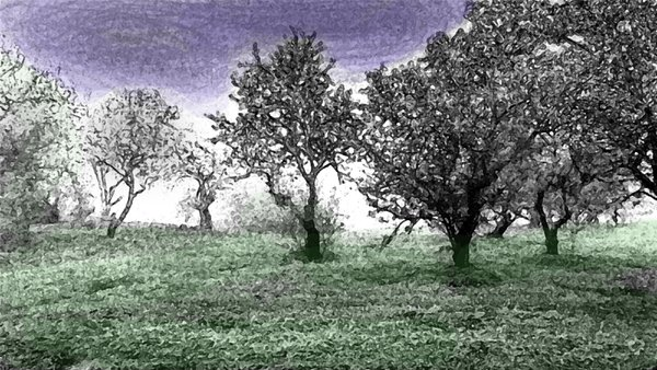 Almond Orchard altered thumbnail