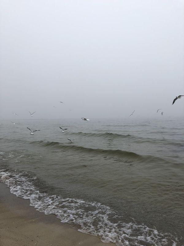 Seagulls in the fog thumbnail