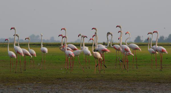 Flamingo!  thumbnail