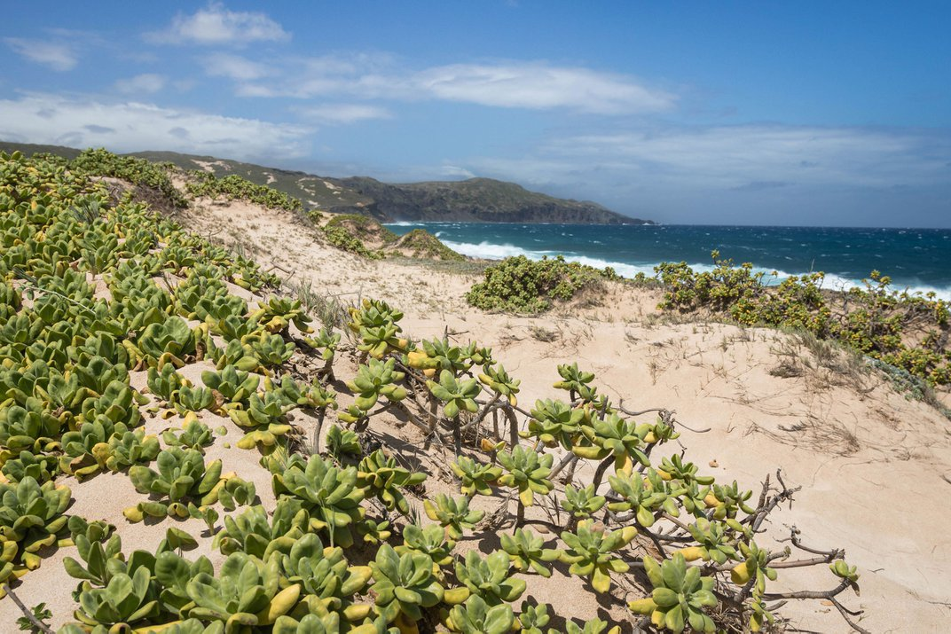 Hawai'i's Last Dunes Are Home to Species Found Nowhere Else on the Planet