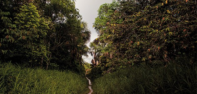 Lost-Tribes-of-the-Amazon-jungle-631.jpg