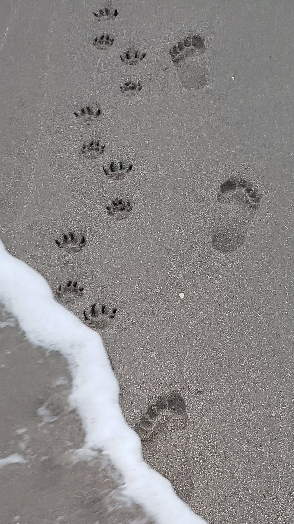 Best friend footprints in the sand thumbnail