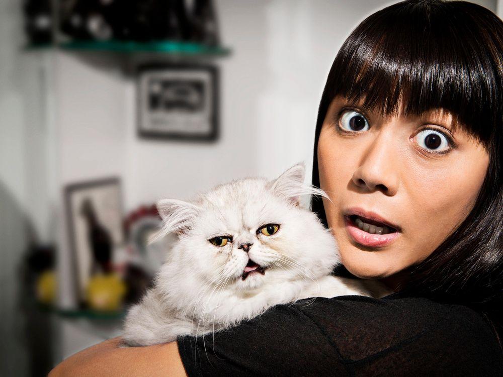 Cat reaction