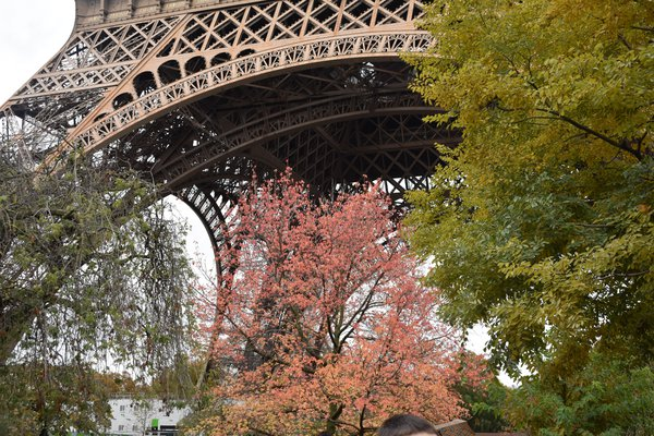 The Eiffel Tower in Fall thumbnail