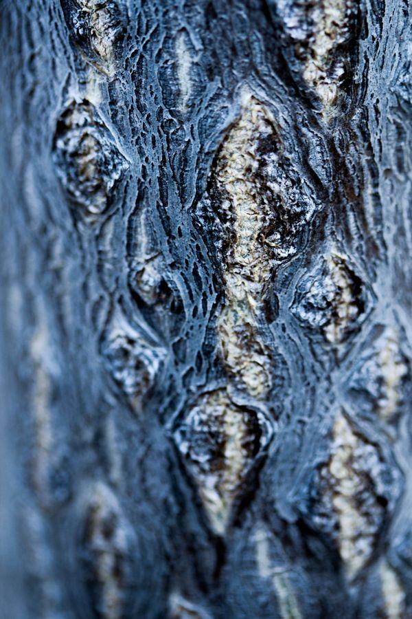 Water or Tree Bark? thumbnail
