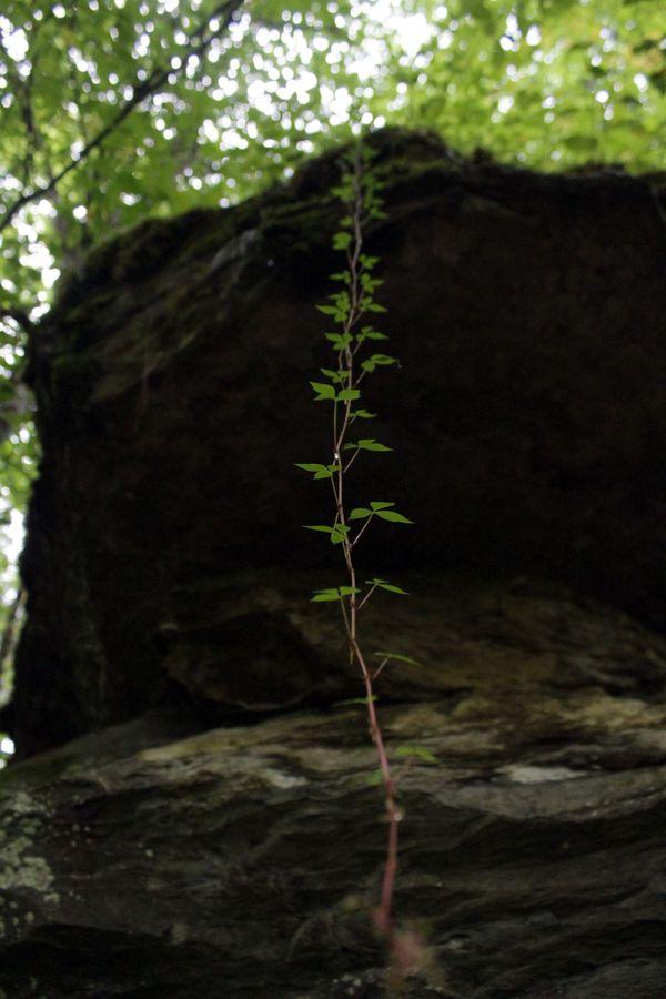 natures ladder thumbnail