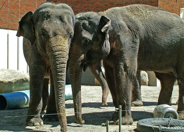 HUGE News From the Zoo: Three New Elephants Are Moving In