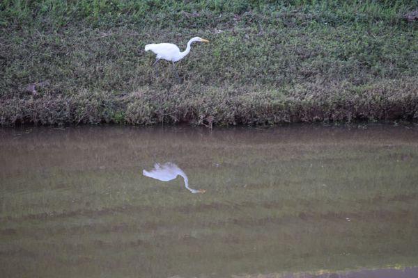 Reflecting Pond thumbnail