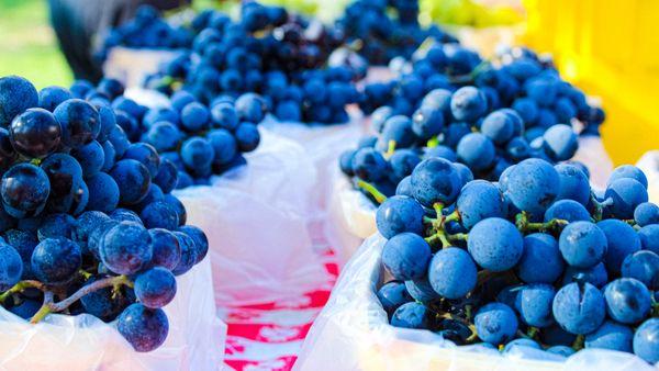 Grapes thumbnail