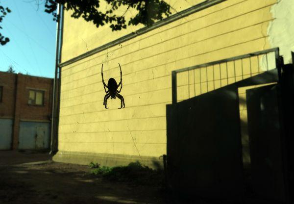 Spider's Web thumbnail