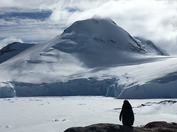 Lonely Penguin in Antarctica  thumbnail