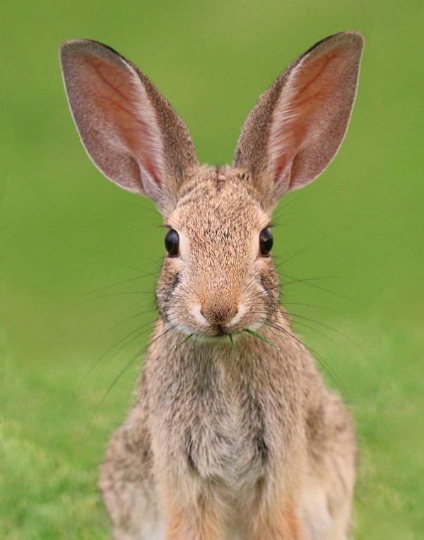 Bunny grassy smile thumbnail
