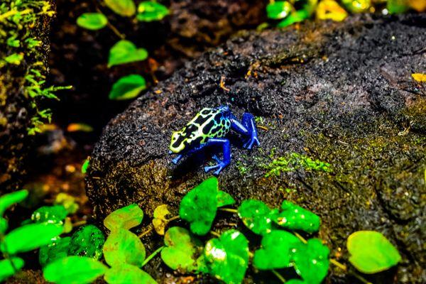 A Frog on a rock thumbnail