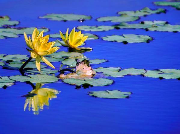 Burst into gorgeous bloom thumbnail