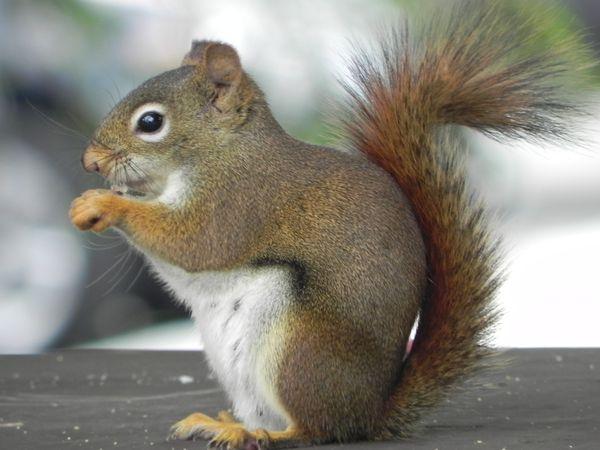 Squirrel enjoying his snack thumbnail