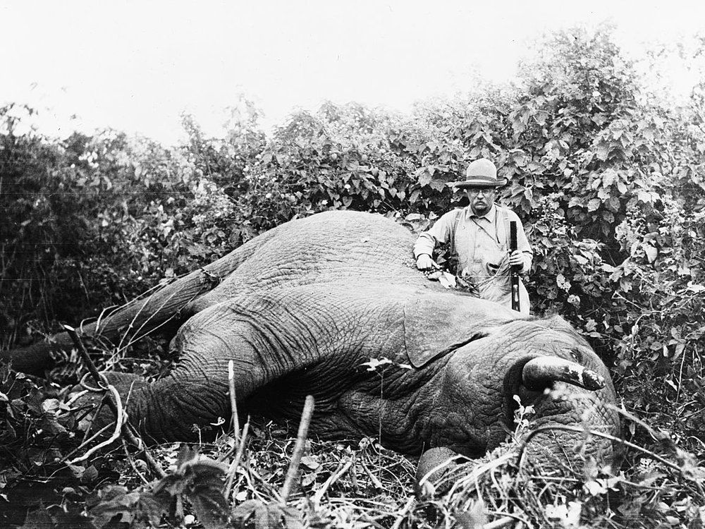 Roosevelt standing next to the elephant he shot on safari
