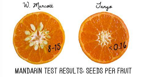 Testing the Tango at the University of California Citrus Breeding Program