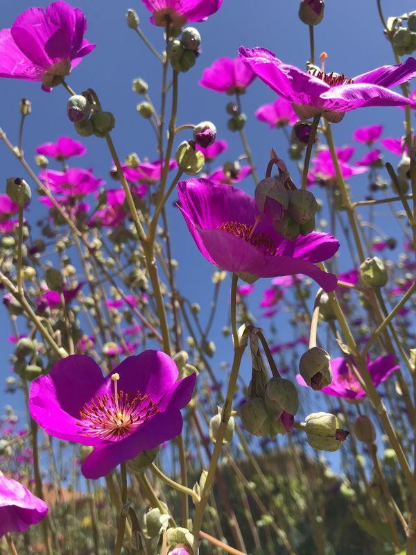 Spring flowers thumbnail