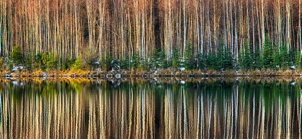 Tree Reflections thumbnail