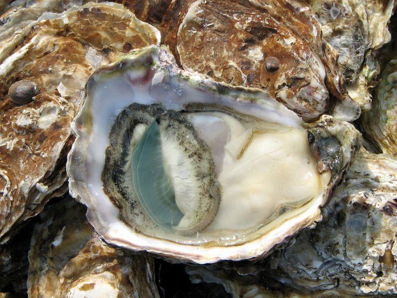open_oyster_lyon_market.jpg
