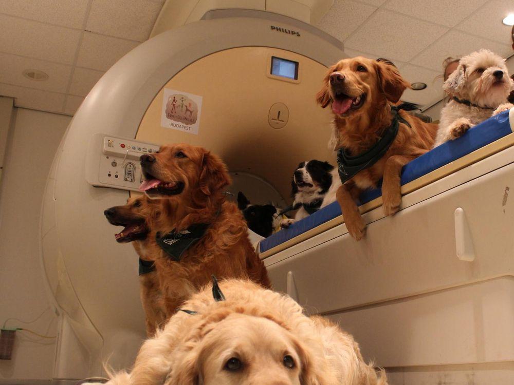 Dogs sitting near an MRI machine