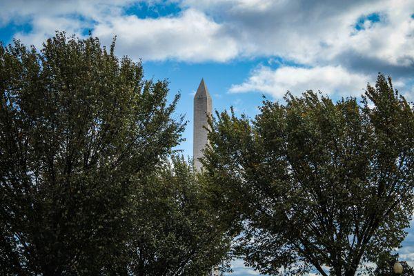 Washington Monument Framed with Trees thumbnail