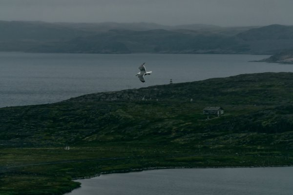 Seagull over the northern village thumbnail