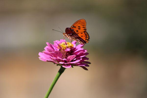 Grassmere Gardens Butterfly thumbnail